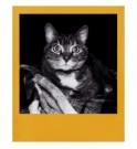 Polaroid Originals črno beli film z barvnimi robovi za Polaroid 600